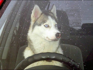 开车中九个常见致命强迫症