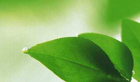 清新绿叶护眼手机壁纸